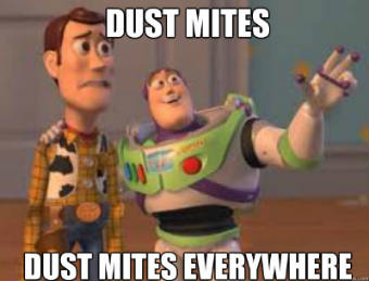 dust mites help bed