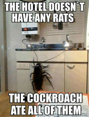 lights on keep roaches away