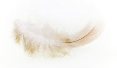 difference white down feather